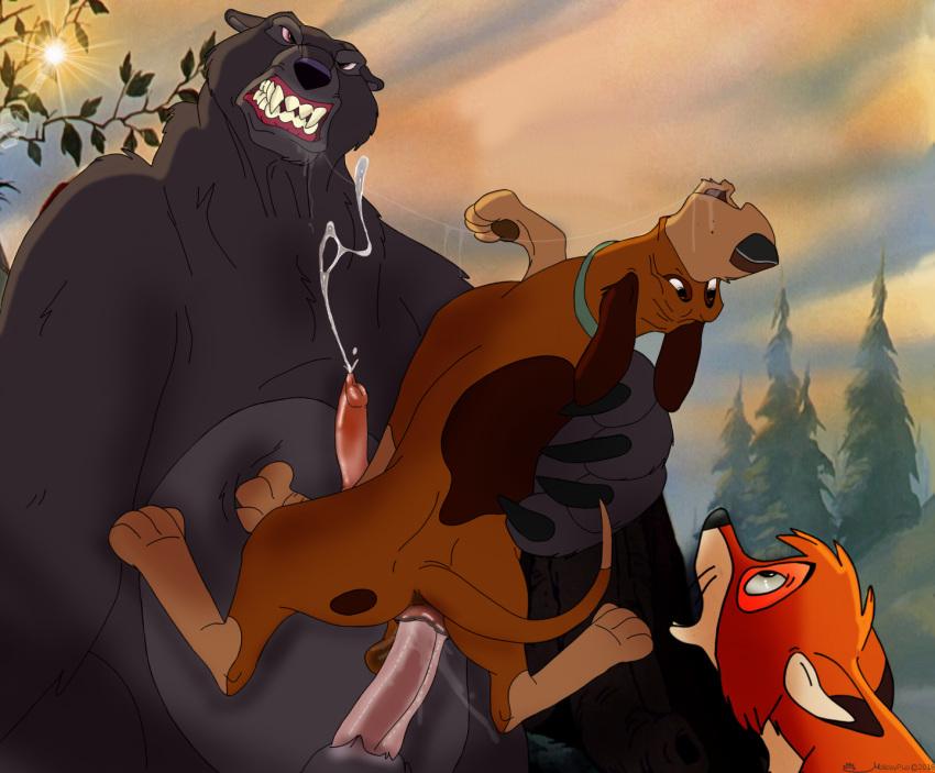and hound the chief fox the Cbt cartoons comics free porn